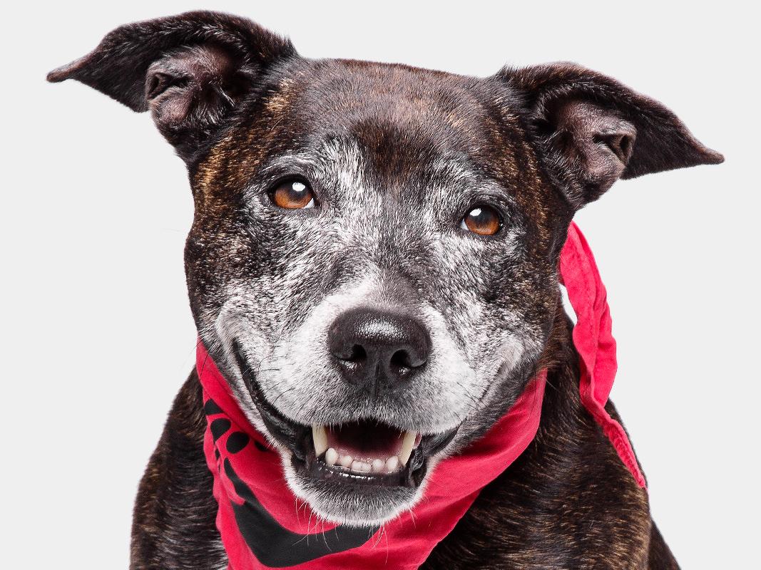 Progetto Fotografico Pet Therapy